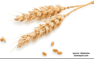 A look at historical wheat yields for Kansas during La Nina
