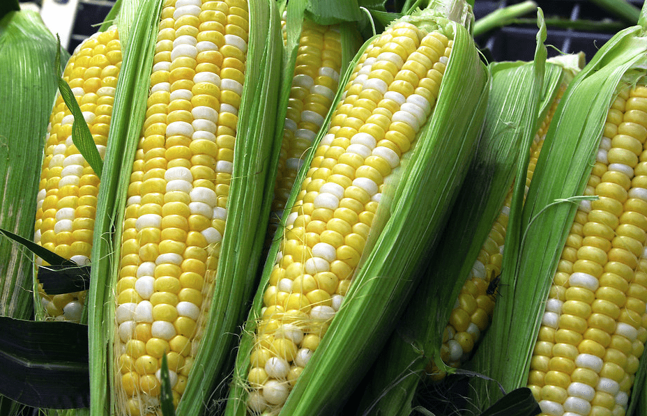 Will Corn Prices Continue to Gain Against Sagging Wheat?