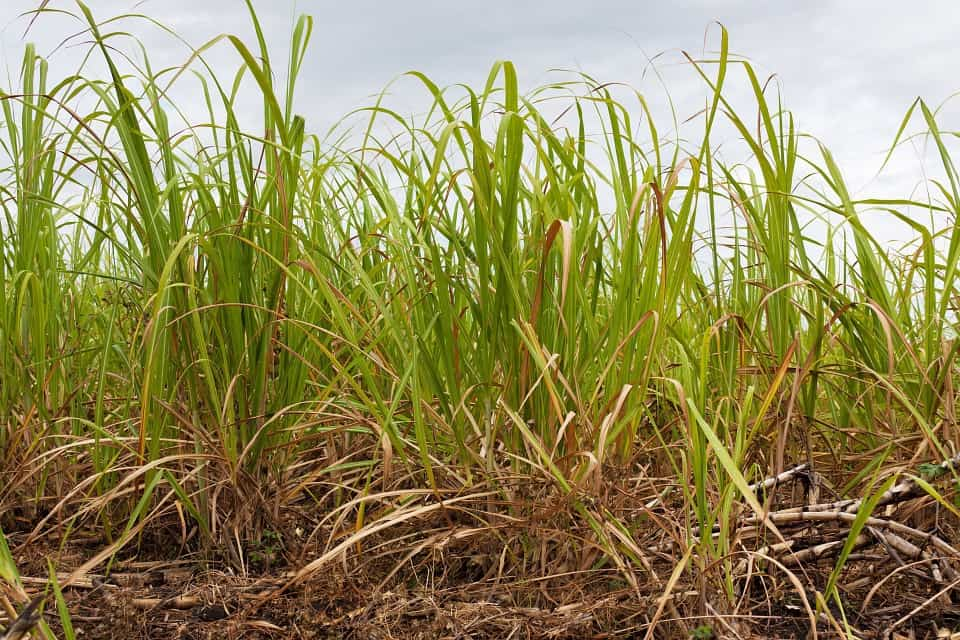 Weather in India & a fuel tax in Brazil: impacts on sugar