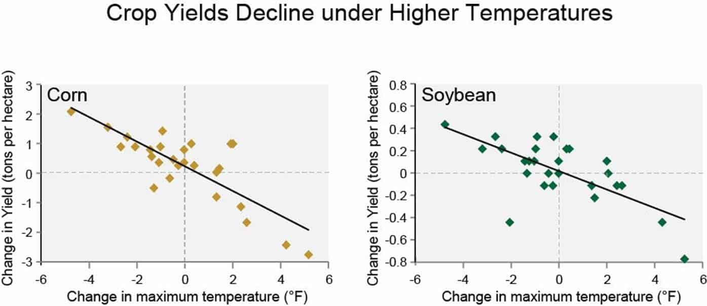 corn, temperatures, rainfall, yields