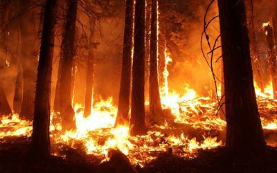 High Winds and Dry Weather Aided Deadly CA Fire; Rain on the way