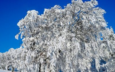 Several snowstorms will bring white Christmas but hinder travel