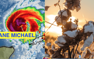 Hurricane Michael: How the loop current and MJO caused his development. What about cotton?