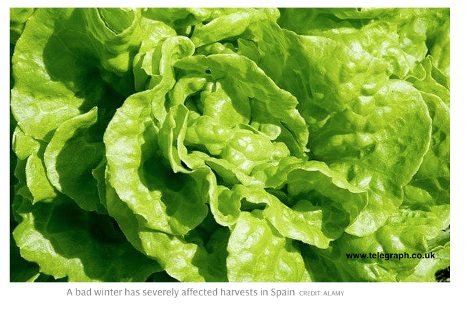 Vegetable Prices Soar in Europe, Extreme Cold; NOT Due to Any Sudden Ice Age