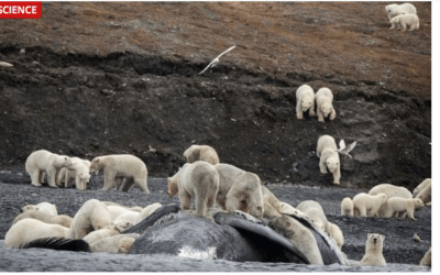 Arctic reaches 90 degrees as the world is burning up. More evidence of Climate Change