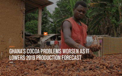 Cocoa prices seeing short covering on El Nino and Swollen Shoot Virus in Ghana