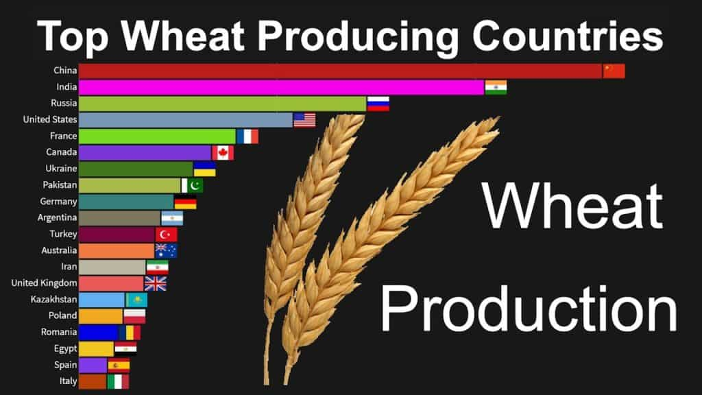 Top wheat producing countries.