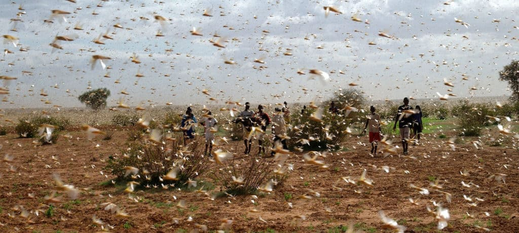 Locusts in east Africa.