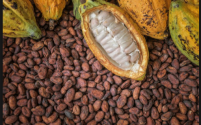 Flooding Rains In Parts Of West Africa Need To Stop To Insure A good Cocoa Crop